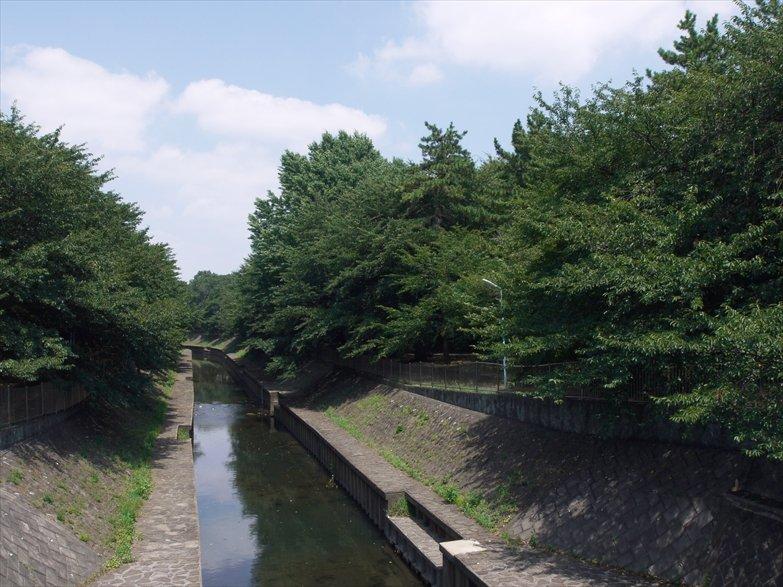 善福寺 緑木