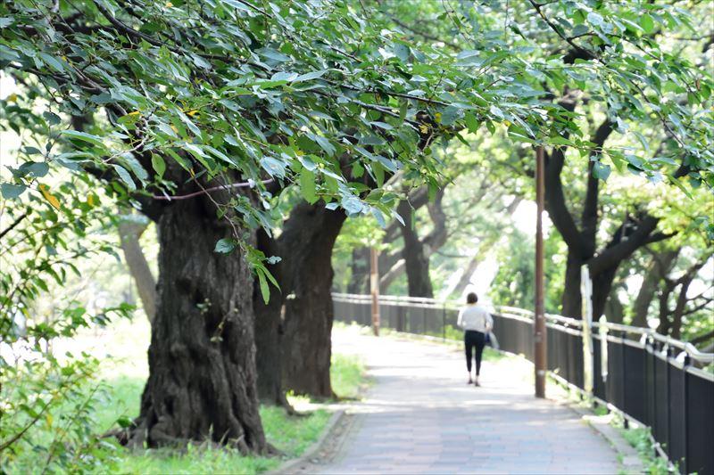 外濠公園(飯田橋駅付近)